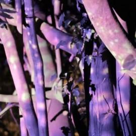Premier temps – mapping vidéo végétal